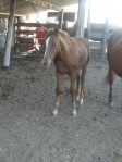 08 filly out of Suzy and Mijo