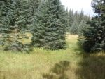 pretty meadow