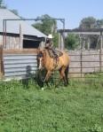 Good lookin' horse and kid