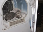 Stupid cat in the dryer, on my sox