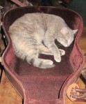 Now she is in my guitar case!